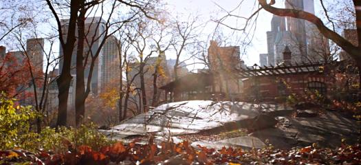 Shot from my slider cinematography video. Using the leaves in the foreground to show the move and drive home the atmosphere.